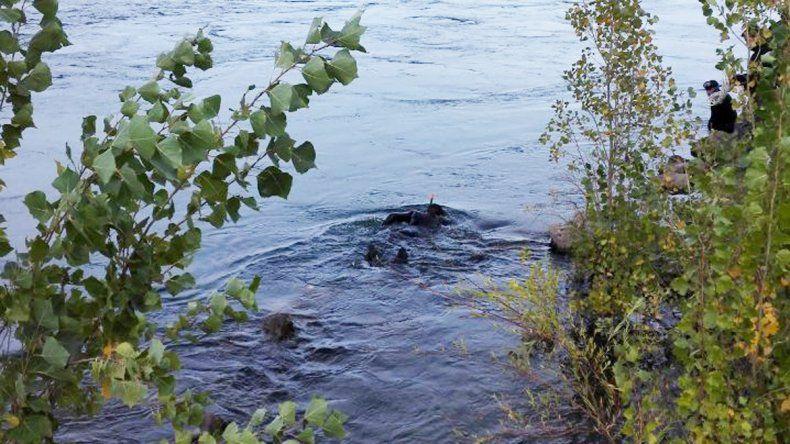 Mañana sigue la búsqueda de Milagros en el río Limay