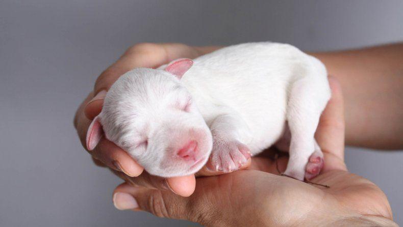 Los cachorros separados de sus madres son muy vulnerables y necesitan atención especial.