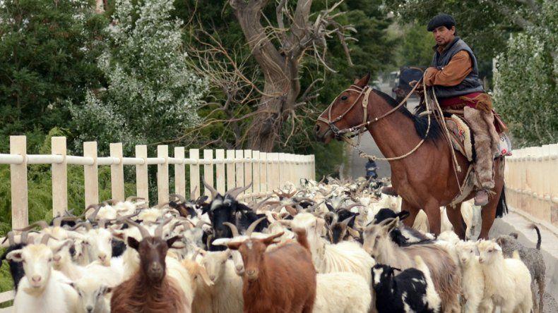 Crianceros de chivos y huerteros temen que les quiten los campos.