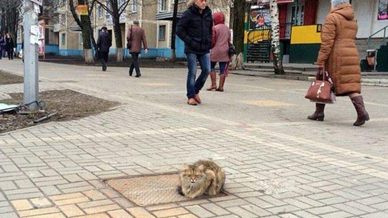 El gatito en una vereda de Rusia