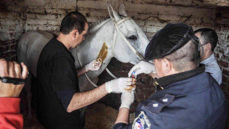 El veterinario policial fue quien tomó las muestras el 17 de agosto. Casi 8 meses después