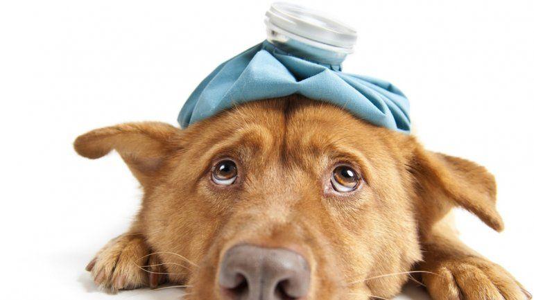 Es importante hacerlo bajo prescripción profesional y nunca automedicarlos.