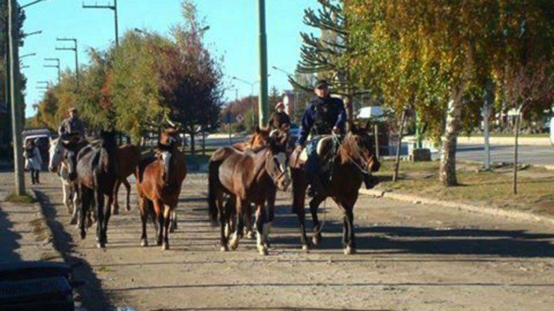 Secuestran 12 caballos sueltos en la Ruta 60 cerca de Junín de los Andes.