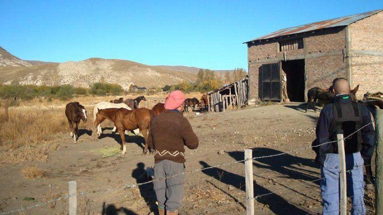 Caballos en el corral municipal de Junín de los Andes.