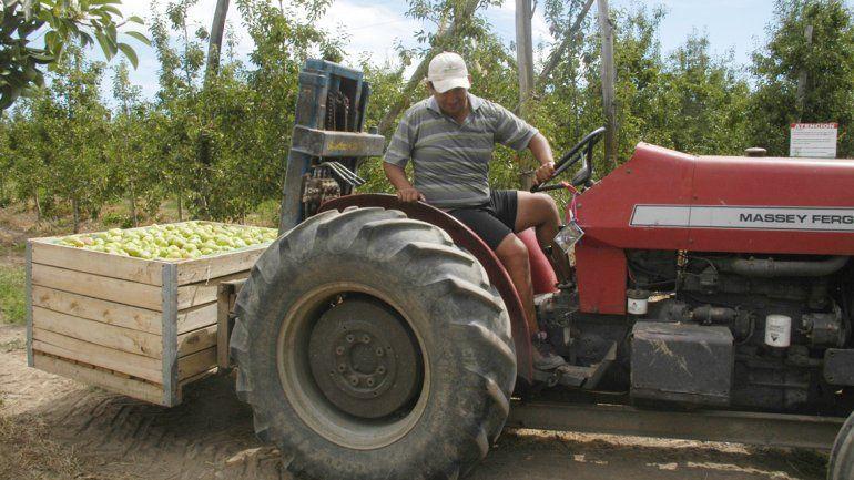 Los productores gastan 100 litros de gasoil por día con cada tractor.