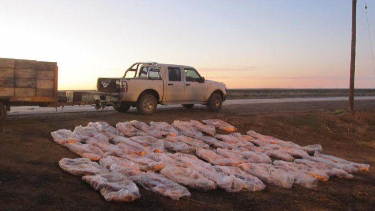 Decomisaron 800 kilos de asado con hueso escondido en colmenas