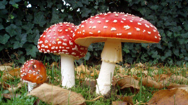 Detectan drogas hechas con veneno de sapos y hongos