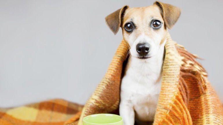 Claves para cuidar a tu perro en épocas de bajas temperaturas y de peligros de enfermedades.