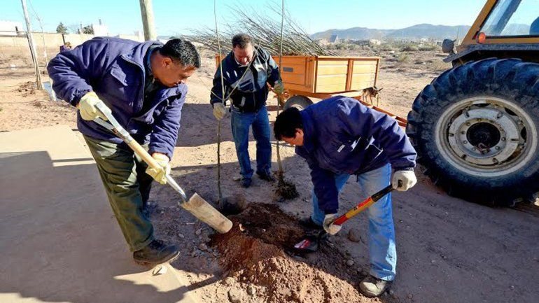 Plantarán 22 mil árboles para llenar de verde la ciudad