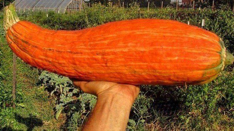 El fruto de las semillas resultó ser una nueva especie de calabaza.