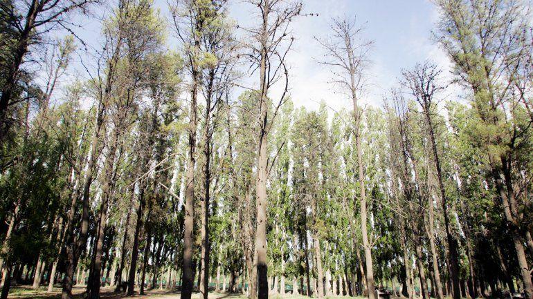 Un bosque está en venta a orillas del dique Ballester