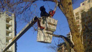 La poda de ramas se realiza de manera preventiva.