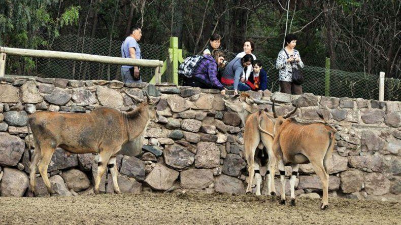 Los animales exóticos se reubicarán y los domésticos van a subasta.