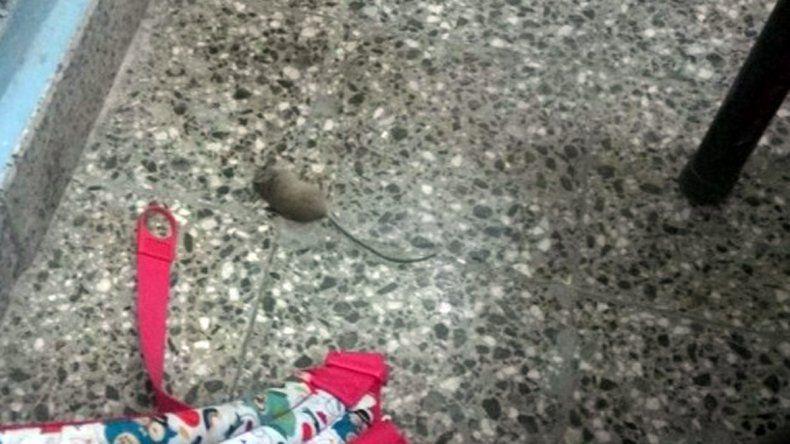 Encontró una laucha en la escuela y la mató a mochilazos
