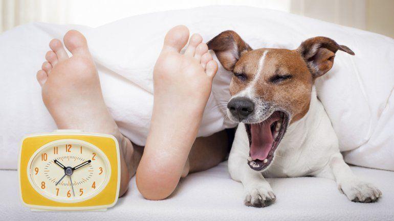 Pros y contras de compartir la cama con tu perro o gato.