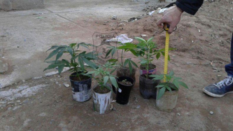 Les secuestraron nueve plantas de marihuana.