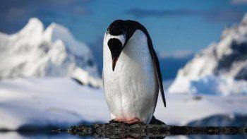 Los pingüinos de la Antártida podrían desaparecer