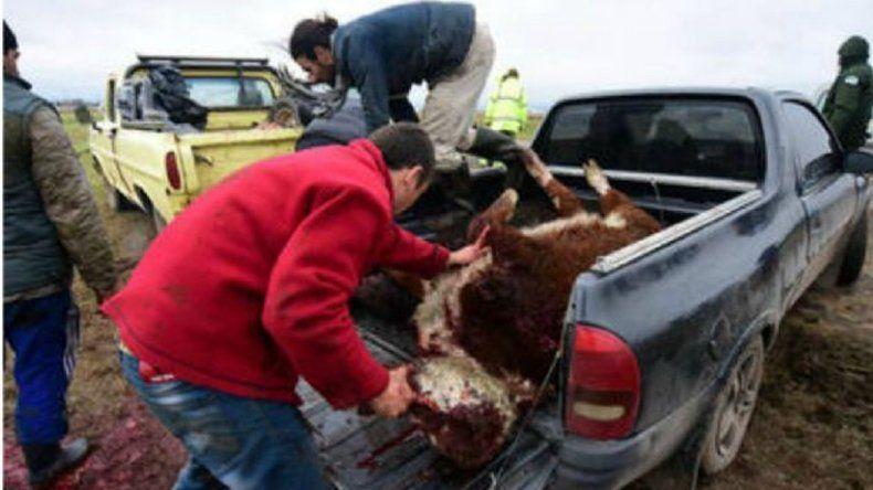 Las imágenes son contundentes: un ternero entero arriba de una camioneta. Muchos cargaron las partes al hombro.