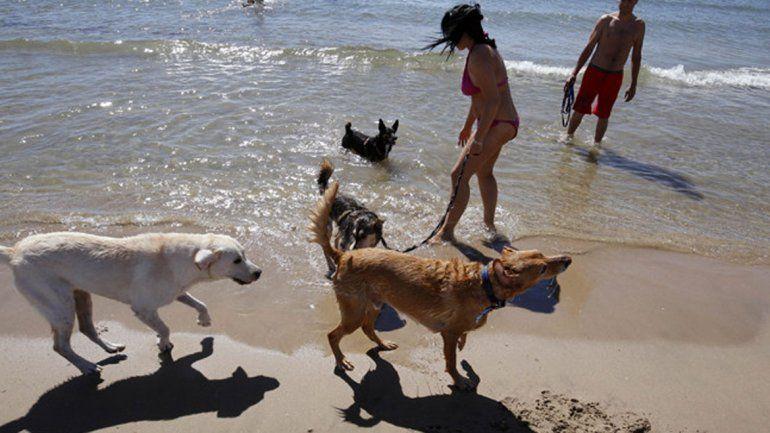Los perros deberán tener las vacunas al día y bozal si son razas peligrosas. No van a poder circular por la playa.