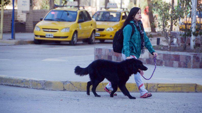 Desde el municipio advierten que casi ningún vecino pasea a su mascota con bozal