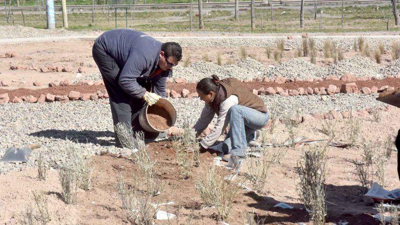 Operarios plantando especies autóctonas en el parque industrial.