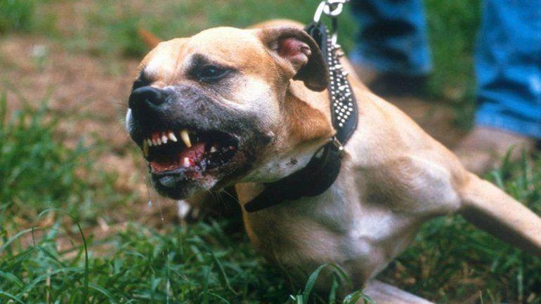 El animal suele atacar: su dueño ya tiene seis denuncias en su contra.