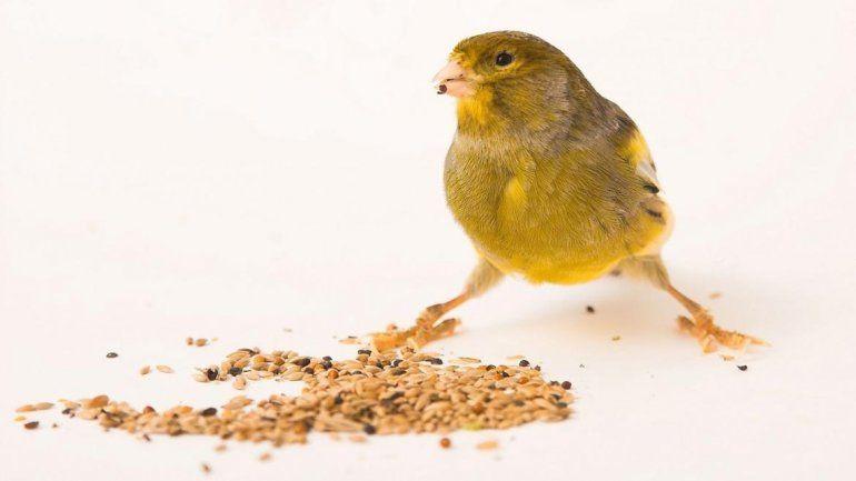 La comida es a base de granos