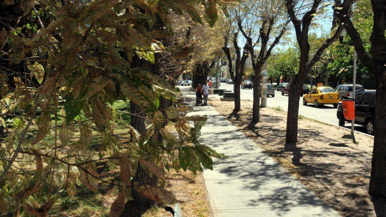 El municipio le cambiará la cara a la plaza Roca