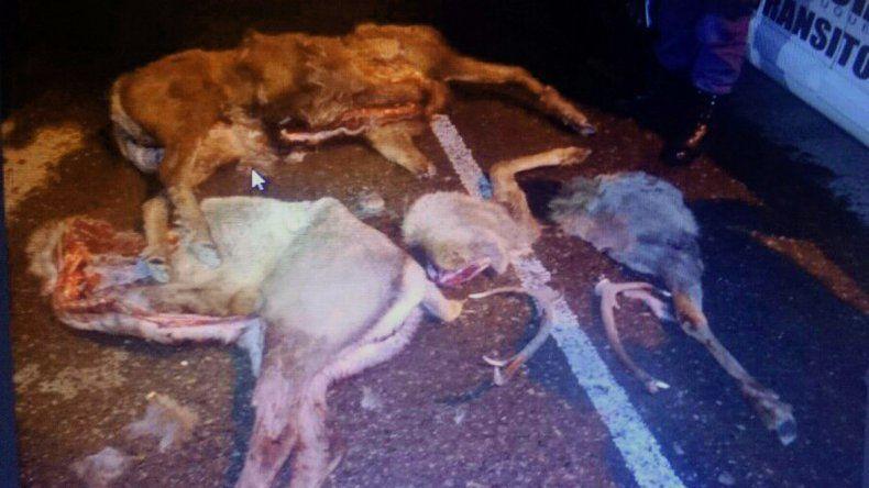 Detuvieron a tres personas que cazaban ciervos durante la madrugada