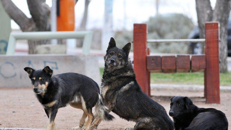 La creación de un hospital público ayudaría a fomentar la tenencia responsable de mascotas.