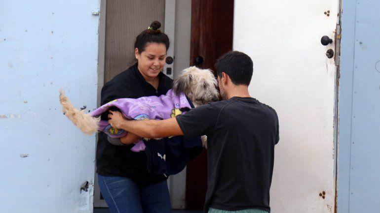A través de castraciones se pretende controlar a la población canina.