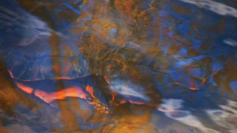 Fotografiaron a una tortuga de agua nadando en el río Negro