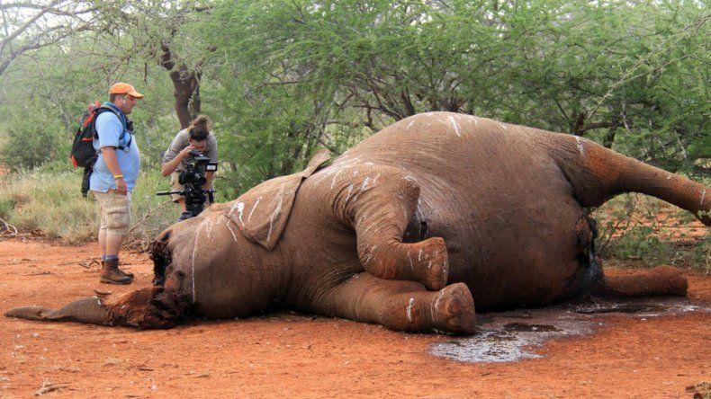 La matanza de elefantes crece y creen que desaparecerán en 15 años