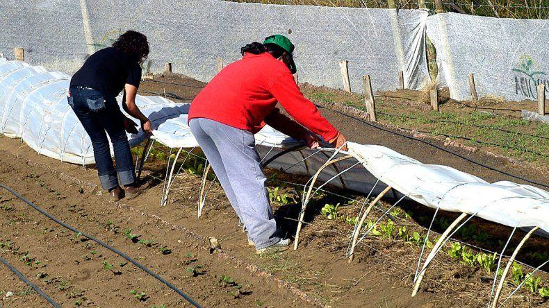 La producción agropecuaria en Neuquén tiene una carrera técnica.