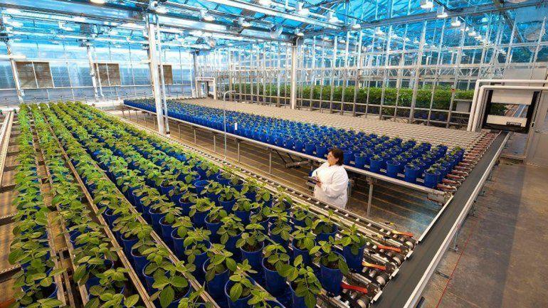 Bayer compró Monsanto para buscar el liderazgo en la agroindustria