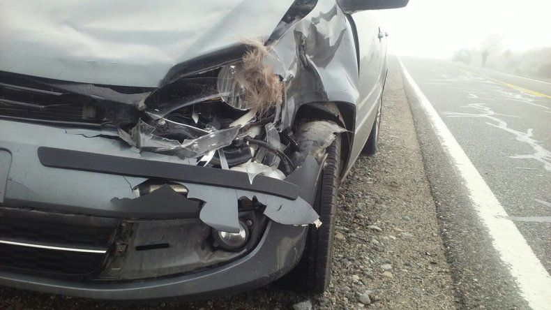 Un turista atropelló a un ciervo que se cruzó en la ruta