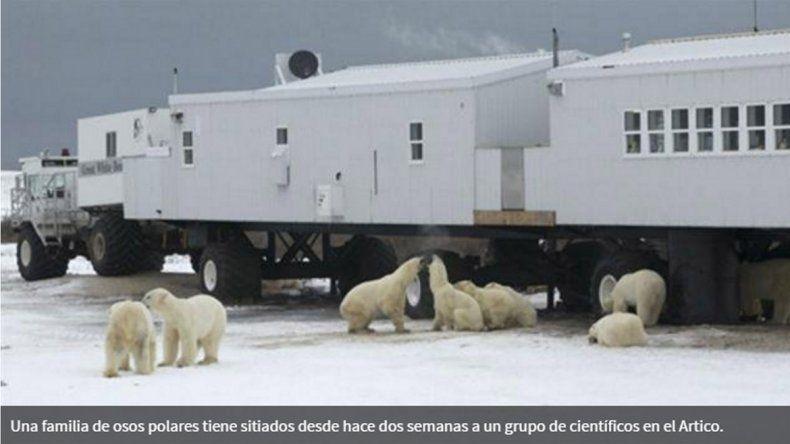 Los animales están hambrientos y se comieron a los perros de los rusos.