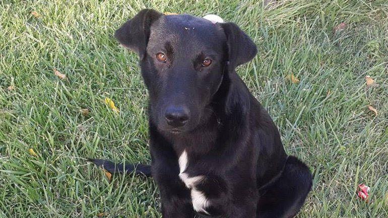 Una vecina de Plottier denunció que su mascota desapareció.