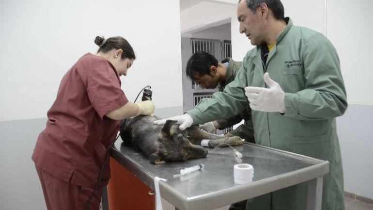 El personal de Vectores y Zoonosis ya puede castrar perros en el quirófano inaugurado en Parque Industrial.