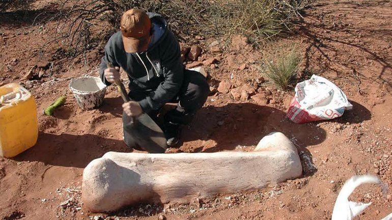 Nuevos hallazgos fósiles más de 85 millones de años en Senillosa y Añelo