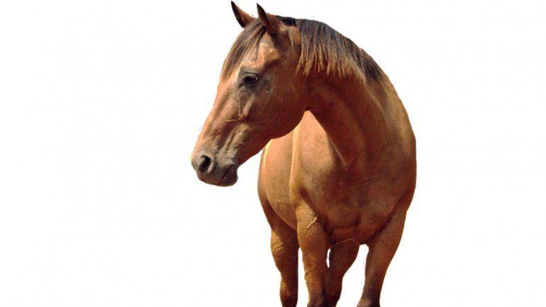 Un grupo de investigadores realizó un trabajo con 23 razas diferentes de equinos y pudo comprobar