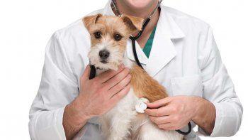 Cuando una mascota sufre un accidente, precisa de nuestra rápida acción. Te contamos qué hacer.