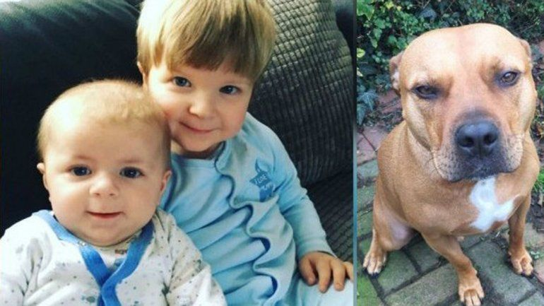 Los hermanitos hacía pocos días que habían llegado a la casa de su tia. Dicen que el perro tuvo un ataque de celos.