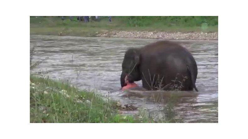 El emocionante salvataje se produjo en un parque natural de Tailandia.