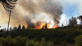 un incendio consumio diez hectareas de un bosque nativo en villa pehuenia
