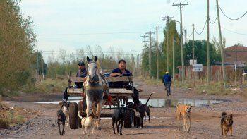 Los caballos que tiran los carros sufren un maltrato y un deterioro físico permanente.