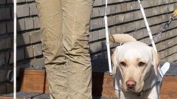 un perro, el mejor de los asistentes terapeuticos