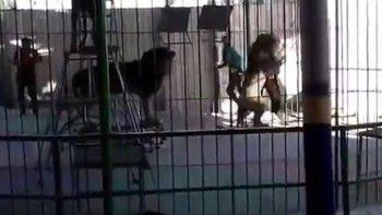 El animal lo atacó como si Shaheen Islam, de 35 años, fuera una presa.