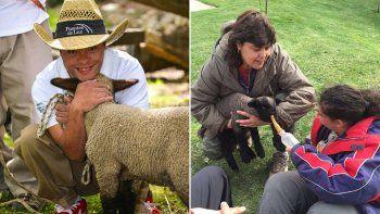 se robaron y comieron a margarita, una oveja entrenada para acompanar a discapacitados