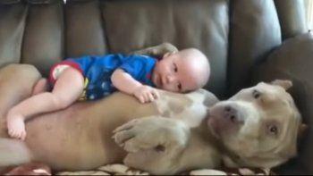 Un bebé se acuesta en la panza de su perro